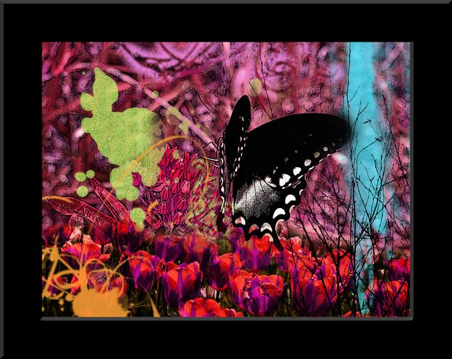 CollageTigerSwallowtailBl
